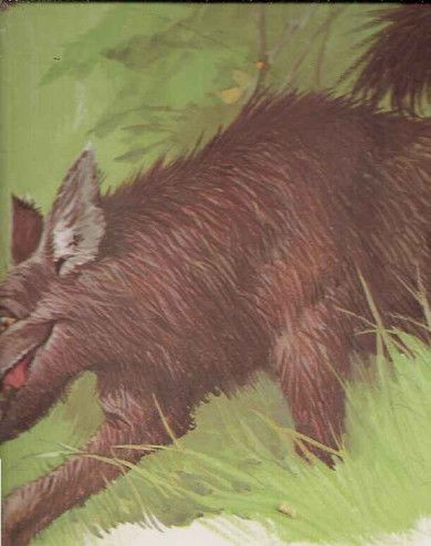 Lobo encontra Chapeuzinho