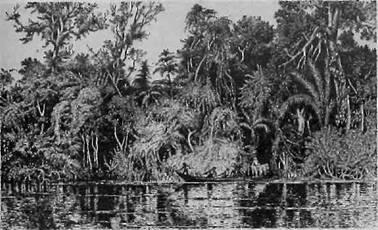 Resumo sobre as Riquezas do Brasil Colonial