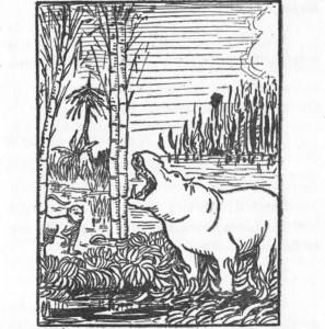 O macaco viu o hipopótamo