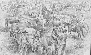 feira do gado, criação de gado