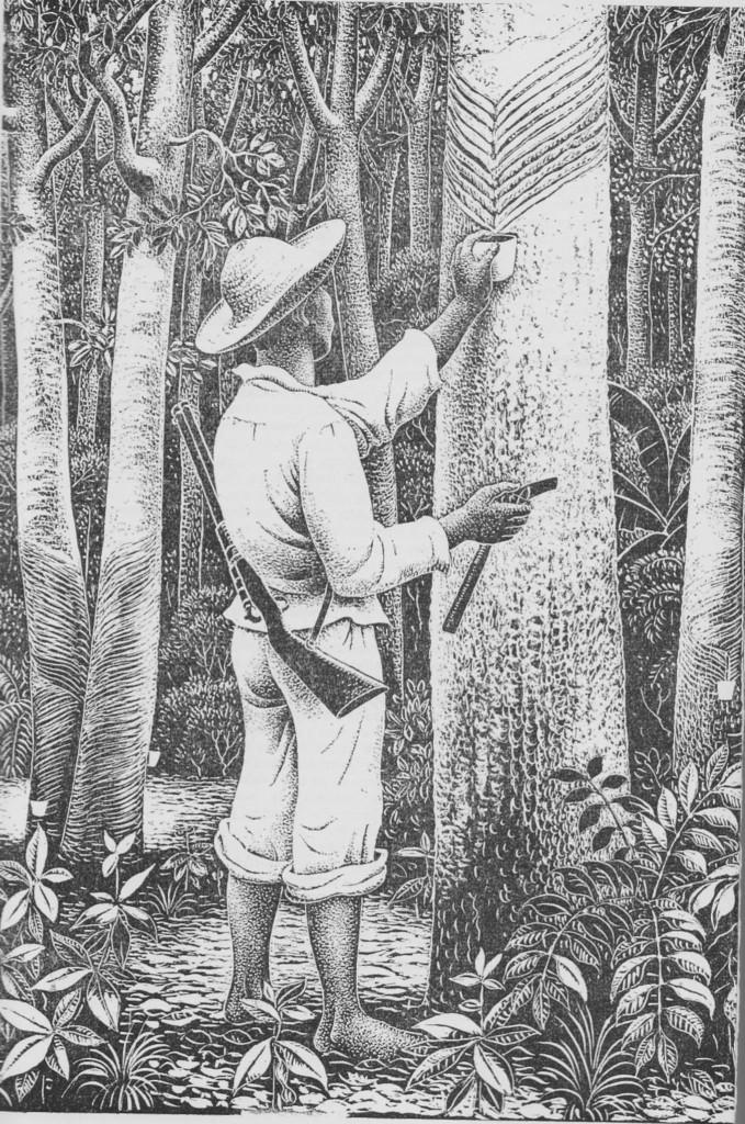 Serigueiro da amazônia, ciclo da borracha