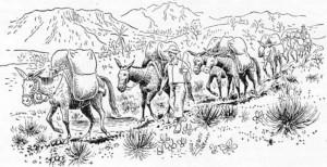burros de carga tropeiros