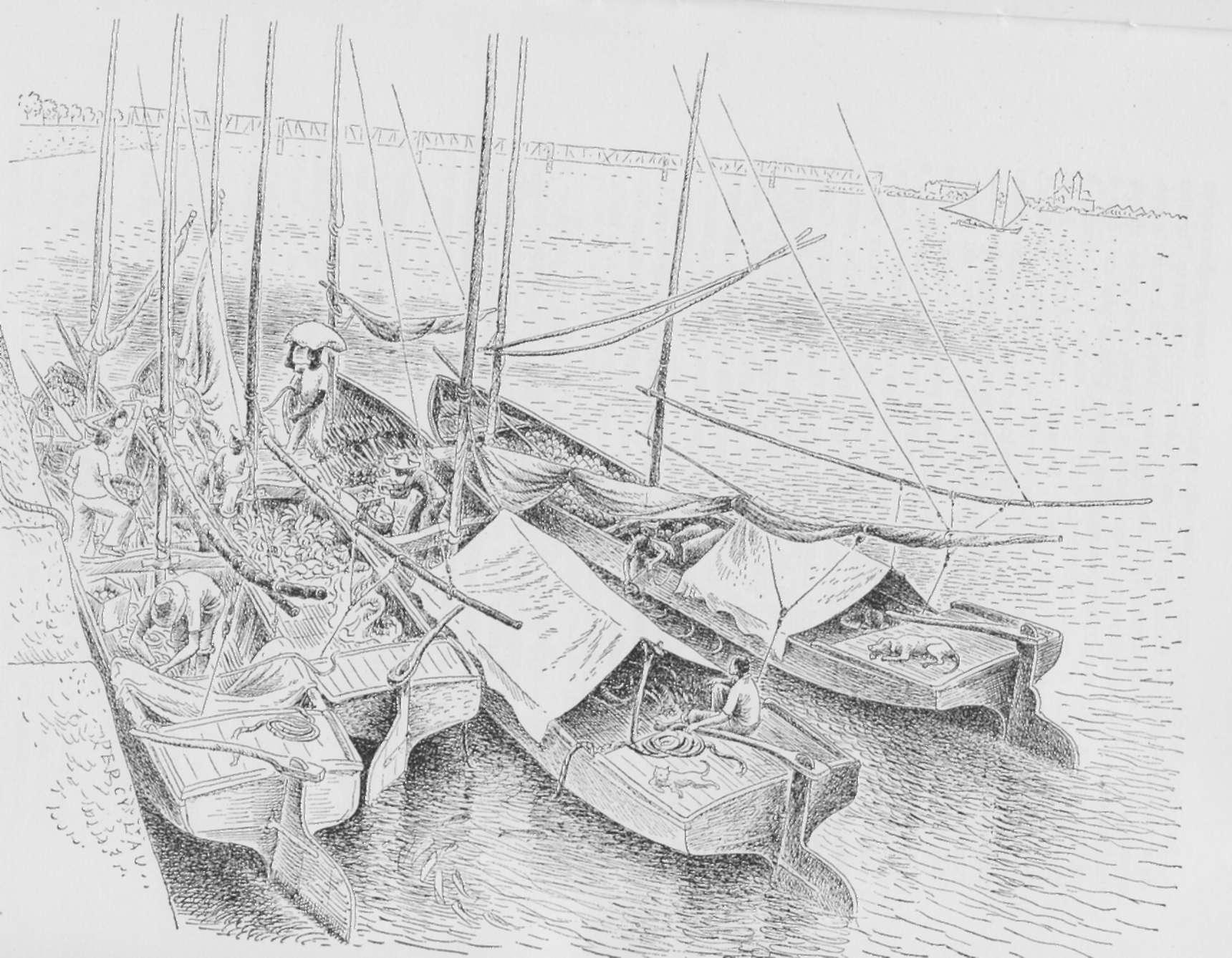 pranchas pescadores