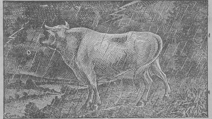 Descrição de um aguaceiro numa fazenda