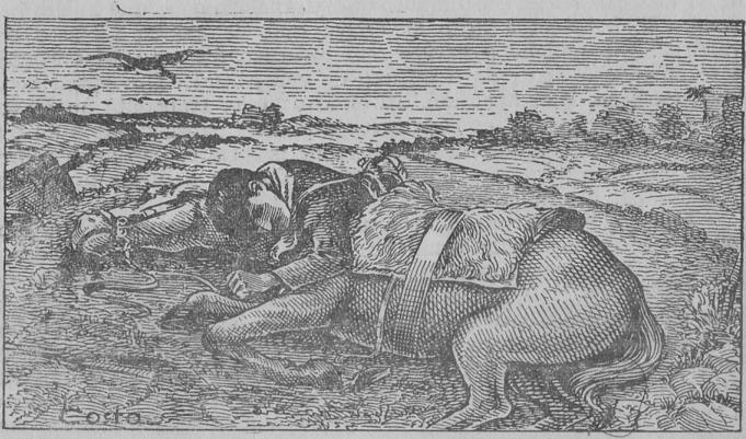 gaucho e seu cavalo