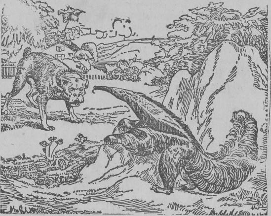 O cão e o tamanduá – Fábula
