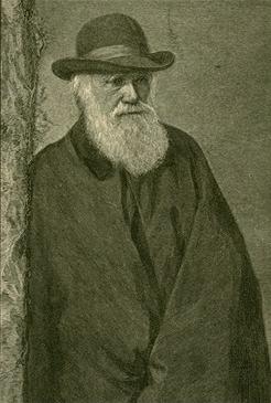 Charles Darwin, resumo, biografia, seleção natural e evolucionismo