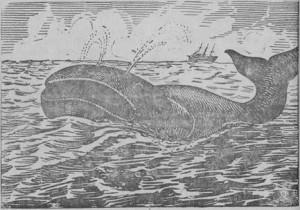 baleia, definição, resumo